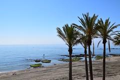 Playa de Benalmádena (Andalucía, España, 15-6-2018) (Juanje Orío) Tags: 2018 provinciademálaga benalmádena andalucía españa espagne espanha espanya spain playa beach mar sea mediterráneo agua water árbol palmera costa