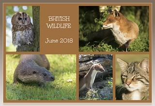 2018-06 5X british wildlife [EXPLORED]
