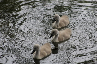 Roundhay Park (17-06-18) Leeds , West Yorkshire , England , UK