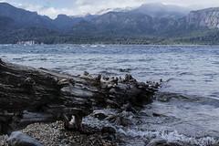 Colores del frío (sergiopastore1) Tags: agua paisaje montaña roca cielo tronco árbol lago landscape costa nature naturaleza