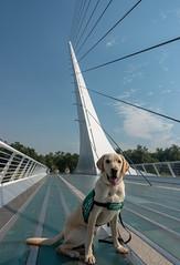 Johnston on the Sundial Bridge (niallkennedy) Tags: redding johnston sundialbridge