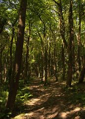 Clandeboye Wood (John D McDonald) Tags: northernireland ni ulster geotagged countydown codown northdown newtownards ards forest woods clandeboye clandeboyewood trees green brown nikon d3300 nikond3300 mottled mottledlight mottling dappled dappledlight dappling russet