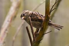 DSC_0036-2 (whotneckst) Tags: nikond7200 nikkor300mmf4afed birds