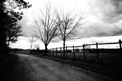 Two trees (stefankamert) Tags: stefankamert trees people blackandwhite blackwhite noir noiretblanc sony rx1 rx1r mirrorless fullframe zeiss 35mm clouds sky landscape mood way