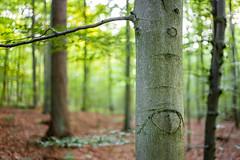 Forest (20.07.2018) (Siebbi) Tags: forest wald tree baum trees bäume nature natur borke rinde bark dof depthoffield tiefenschärfe schärfentiefe openaperture offenblende