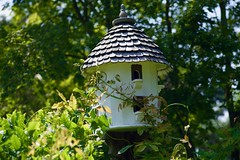 Warm embraces! (ineedathis, Everyday I get up, it's a great day!) Tags: garden trees birdhouse flowers nature summer nikond750 wisteria japanesemaple acerpalmatum dovecote woodworking