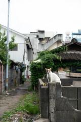 猫 (fumi*23) Tags: ilce7rm3 sony 55mm sonnartfe55mmf18za sel55f18z feline cat chat katze gato neko animal alley street miyazaki a7r3 ねこ 猫 宮崎 ソニー sonnar zeiss 廃墟