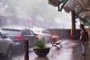 The shower / La douche (Jacques Lebleu) Tags: wet rain street shower thundershower downpour water summer montréal petitepatrie man