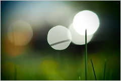 liii (Eventual-Decline) Tags: macrophotography macro grass garden olympus colors beauty bokeh olympusem10iii em10markiii em10iii wideopen prime primelens panasonic42517