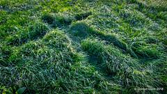 IMG_1885e (ppg_pelgis) Tags: omagh northern ireland tyrone uk grass dairy farm field snowangel grassangel ulster funny