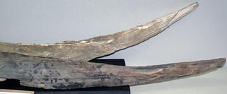 Mammuthus primigenius (woolly mammoth tusks) (Pleistocene; Hanson Group Quarries, Newtown, Ohio, USA) 2