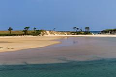 Surprise... (Larch) Tags: beach water ocean sand sea sky tree pin pine scenery landscape côtecantabrique cantabriancoast espagne spain cantabria marée tide maréedescendante ebbingtide