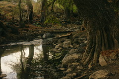 EL ÁRBOL. (NIKONIANO) Tags: árbol árboles nature camécuaro michoacán méxico naturesfinest natureselegantshots naturethroughthelens
