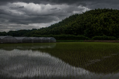 Sunset. (Yasuyuki Oomagari) Tags:  mountain bamboo rice greenhouse reflection green sunset country countryside japan fukuoka kyushu nikon d850 zeiss distagont1435 日本 田んぼ 農業 田植え agriculture