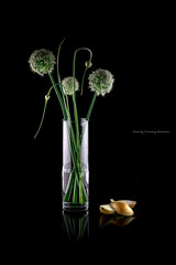 SAG_6464s (dmitry97) Tags: onion bouquet black flowers light mirror