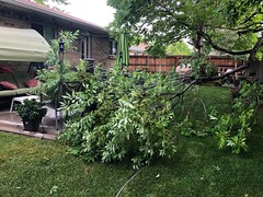 June 19, 2018 - Damage from hail the previous night. (Mary Lindow)