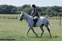 IMG_9133-2 (Mark Someville) Tags: greatwoodcharityopenday30062018 greatwood charity ror race horse exracehorse rehoming stud aintree newbury doncaster ascot cheltenham greatwoodcharityshow30062018