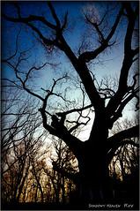 神依木...I (SHADOWY HEAVEN Aya) Tags: 14112890a0051 北海道 日本 ファインダー越しの私の世界 写真好きな人と繋がりたい 写真撮ってる人と繋がりたい 写真の奏でる私の世界 coregraphy japan hokkaido tokyocameraclub igers igersjp phosjapan picsjp 空 sky 神木 御神木 神依木 tree trees sacredtree