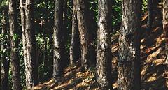 Morning in the forest (marijanaivljanin993) Tags: wood forest tree morning sunrays summer day photo srbija serbia nikon d3200