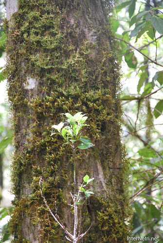Національний парк Гарахонай, Гомера, Канарські острови  InterNetri  0726