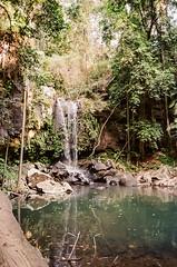 Chase those Waterfalls (-Sambo) Tags: ae1 program 35mm 35 mm kodak gold 400 australia july springbrook national park waterfall rain forest