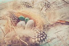 THERE IS MORE TO LIFE THAN WALKING ON EGGSHELLS (Ayeshadows) Tags: 7dwf eggs nest feathers life inside theme