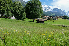 Wengen, Swiss Alps (Nadialeesi) Tags: wengen switzerland svizzera alps swissalps beauty mountains montagne fujifilm fujifilmxt20 xt20 fujixt20 travel travelphotography beauté fujilovers spring springtime europe naturallight nature naturalbeauty sky sun sunlight june 2018 green bluesky clouds clear flowers snow