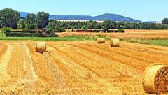 harvest time (Ein Blickfänger) Tags: ernte erntezeit harvest harvesttime korn grain sommer summertime sun sonne scenicview landwirtschaft agriculture