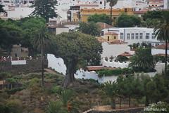 Ікод-де-лос-Вінос, Тенеріфе, Канарські острови  InterNetri  140