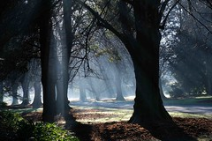 Mist and light on a frosty morning (Maureen Pierre) Tags: christchurchbotanicgardens christchurchnewzealand mist frost light rays beams trees early