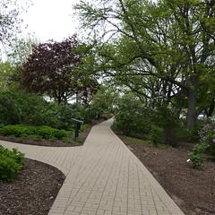 Lombard, IL, Lilacia Park, Lilac Bushes along a Path (Mary Warren 13.6+ Million Views) Tags: lombardil lilaciapark spring nature flora plants garden park bushes lilacbushes tree trail path walkway