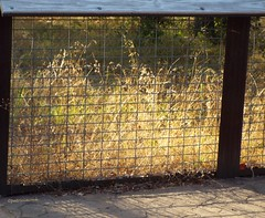 Lighted Plants behind Fence (Tricia H C) Tags: fence flora nature light weeds wood