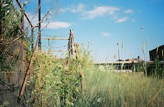 Overgrown steps (knautia) Tags: riveravon bristol england uk july 2018 film ishootfilm olympus xa2 olympusxa2 kodak kodacolor 200iso nxa2roll34 river avon mud cumberlandbasin floatingharbour jetty lowtide grass