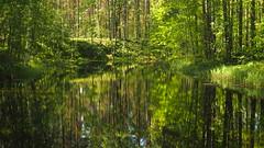 Green River (jurgenkubel) Tags: tree baum träd flod river fluss lån landskap landschaft landscape riverscape olympus finland finnland å reflections speglingar spiegelungen joensuu carelia karelen
