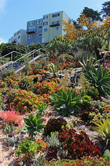 16th Avenue Tiled Steps - San Francisco, CA (russ david) Tags: 16th avenue tiled steps garden sanfrancisco ca june 2018