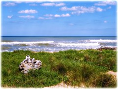 Marineland Beach (Chris C. Crowley) Tags: marinelandbeach marineladflorida beach graas flowers waves ocean atlanticocean coast coastal coastline shore shoreline seashore sea water bluesky clouds landscape driftwood