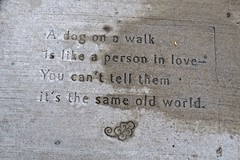 Sidewalk Poem, St. Paul, MN (Robby Virus) Tags: stpaul minnesota mn saint paul poem sidewalk cement concrete pavement night kitchen stainless steel sink dog walk person love same old world