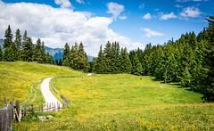 Pure nature (wiedenmann.markus) Tags: sunny alpes alpine alm meadow italy merano lana southtyrol südtirol vigiljoch nature