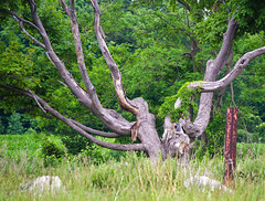 Branching Out (jeffyphotos) Tags: treetrunks shrubs green