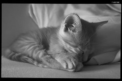 IMG_20180615_063013 (anto-logic) Tags: gatto raja occhi animali amicianimali amici cuccioli belli bellissimi amore dolci sonno sleep primopiano dof profonditàdicampo blackwhite biancoenero bw bn felini libero libertà ritratto stupendo gorgeous nice pets pretty cute lovely cat eyes animals animalfriends friends puppies beautiful love sweet foreground depthoffield color colored feline free freedom portrait carezza mano hand caress naturallight skin lighting crop charming puntodivista pov bokeh focus pointofview postproduzione postproduction lightroom filtro filter effetti effects photoshop alienskin huawei leica p20pro