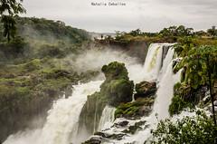 Cataratas de Iguazu (NatyCeballos) Tags: cataratasiguazu cataratas agua water airelibre naturaleza nature maravillas maravillanatural misiones caudal arboleda arboles trees tree