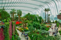 Flower Dome conservatory in the Gardens by the Bay in Singapore (UweBKK (α 77 on )) Tags: flower dome conservatory gardensbythebay gardens bay flowers plants flora green indoors exhibition display collection singapore southeast asia sony alpha 77 slt dslr