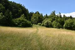 DSC_1924 (gregorv) Tags: slovenia slovenija kum planine mountains mountain nature narava