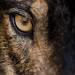 Más información sobre este artista y muchos más en nuestra sección 'Arte en la red': www.casamerica.es/arte-en-la-red