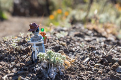 Off road biking (Ballou34) Tags: 2017 7dmark2 7dmarkii 7d2 7dii afol ballou34 canon canon7dmarkii canon7dii eos eos7dmarkii eos7d2 eos7dii flickr lego legographer legography minifigures photography stuckinplastic toy toyphotography toys space alien exploration bike wike off road rock plant sausalito california étatsunis us