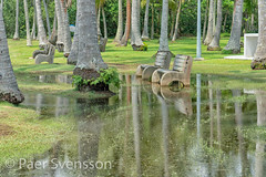 Park benches wading in water (per.svensson@mac.com) Tags: grass natural landscape exotic seashore water beauty vacation noperson pasirrispark palm singapore environment parkbench sunny coconut sightseeing tree nature outdoors asia day outdoor background standingwater holiday wet garden trees summer plant pasirris beautiful travel park paradise island sky green tourist tourism tropical walk