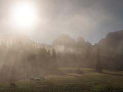 Morgenstimmung (louhma) Tags: morgens morning fog nebel mist sunny sun sunrise südtirol alps kühe pferde