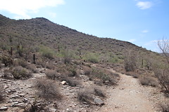 Visit to McDowell Sonoran Preserve (Scottsdale, Arizona) - July 12, 2018 (cseeman) Tags: mcdowellsonoranpreserve mcdowellsonoranpreservescottsdale scottsdale scottsdalenaturepreserve mcdowellsonoranconservancy naturepreserve parks trails arizona park nature publicpark barbie2018 succulents cactus sonorandesert desert saguarocactus mountains mcdowellmountain