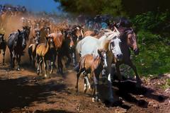 Bajada de las bestas (josebrito21) Tags: rapa rapadelasbestas sabucedo josébrito josebrito2 josébritophotography josébritofotografia josébritofotos josébritophotos rapadasbestas2018 bajadadelasbestas cabalo horse cavalos natureandnothingelse