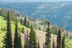 Layers of Green (jamesdelbertanderson) Tags: umatillanationalforest bluemountains washington easternwashington inlandnorthwest nature wenahatucannonwilderness